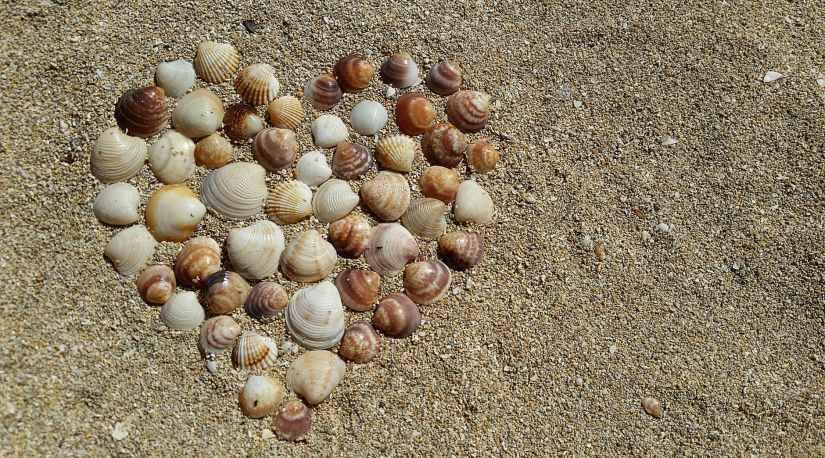 heart shape sea shells on brown beach sand